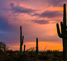 Saguaro Twilight by Radek Hofman