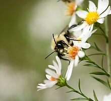 Bumble by Michelle Beaumont