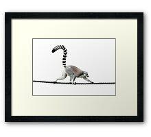 Lemur walking Framed Print