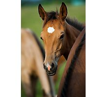 cute foal Photographic Print
