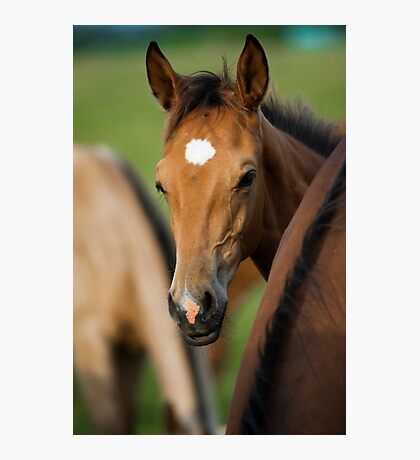 cute foal Photographic Print