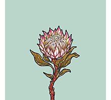 Protea Flower Photographic Print