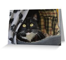 Sox the Black & White she-cat Greeting Card