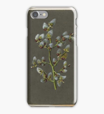 GERMAN, CIRCA a Pussy Willow. Gouache. iPhone Case/Skin