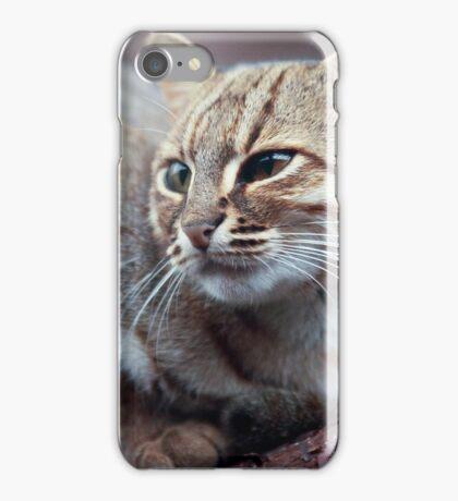 Rusty-Spotted Cat iPhone Case/Skin