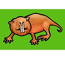 Naked Mole Rat Photographic Print