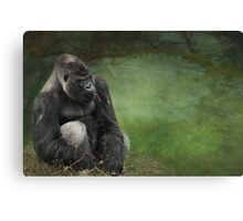 Who's the daddy Canvas Print