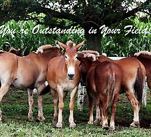 You're Outstanding in Your Field by Polly Peacock