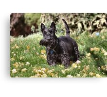 Ach! It's so windy me wiskers are crooked! Canvas Print