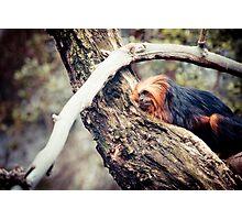 Rainforest Slumber Photographic Print