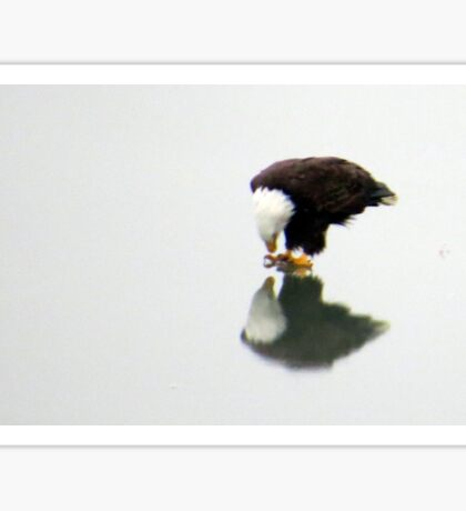 Eagle Reflection (Enhanced) Sticker