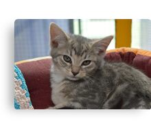 Cute Grey Tabby Kitten Canvas Print