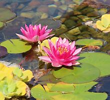 Lovely Garden Pond by hummingbirds