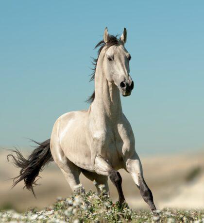 beautiful stallion Sticker