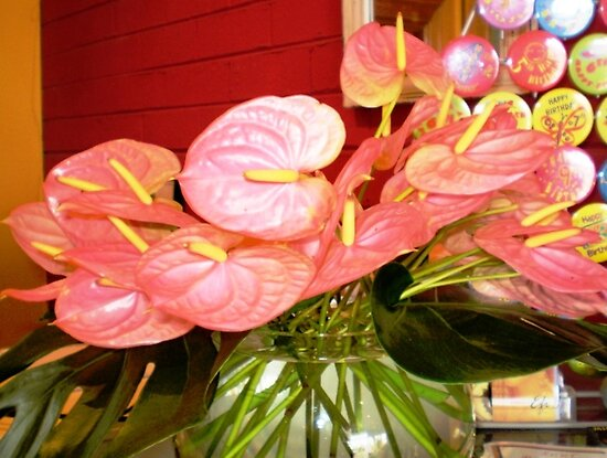*Anthurium (Flamingo Flower) at Florist by EdsMum