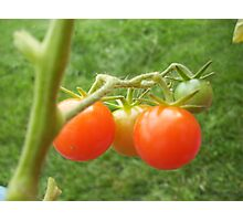 Tomatoes in Progression - Beauty Series Photographic Print