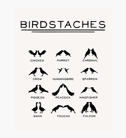 Birdstaches Photographic Print