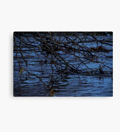Branches in Water Canvas Print