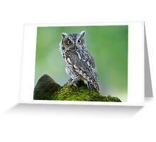 Screech Owl on Rock Greeting Card