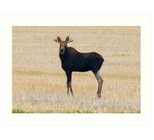 "Nice Young Bull Moose...""I'm a Handsome Dude"" Art Print"