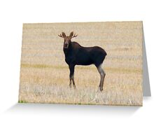 "Nice Young Bull Moose...""I'm a Handsome Dude"" Greeting Card"