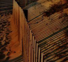 Morning Shadows by Barbara  Brown