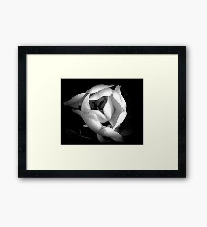 Black and White Tulip Framed Print