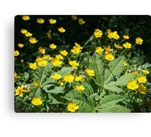 Beautiful yellow wild flowers Canvas Print