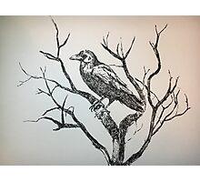 The gigantic raven Photographic Print