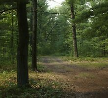 The Path Less Taken? by Holly Schimpf