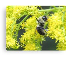 Working Bumble Bee Canvas Print