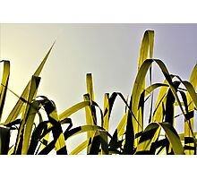 Grasses In The Light - Brown Photographic Print