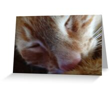 kitty nose Greeting Card