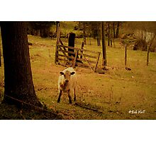 """Keeper of the Gate""... prints and products Photographic Print"