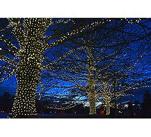 A Longwood Holiday Photographic Print