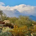 Desert Scape by Barbara  Brown