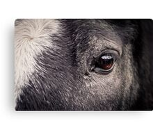Look Into My Eyes - Horse Detail Canvas Print