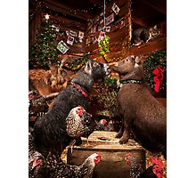 Christmas Goats with Mistletoe Photographic Print