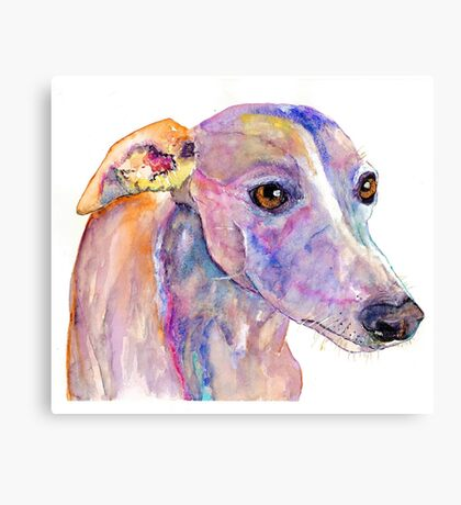 Doby the whippet sock thief Canvas Print