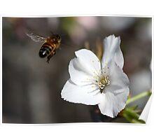 Spring inSight Poster