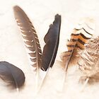 Feathers  by Margaret Stanton