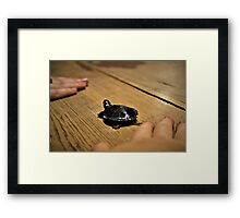 Small Turtle Framed Print
