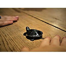 Small Turtle Photographic Print