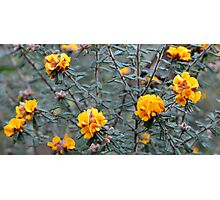 Wild Native Flowers Photographic Print