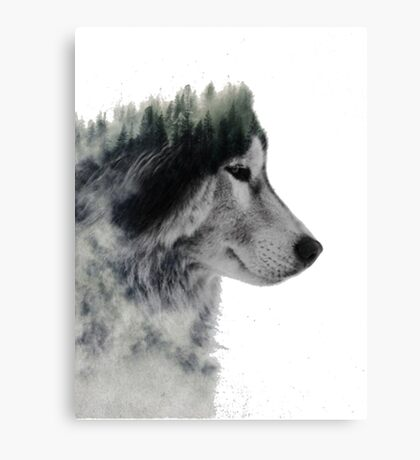 loup nature Canvas Print