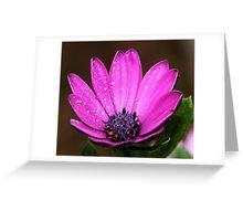 Purple Daisy Greeting Card