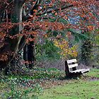 A place to rest, JFK Memorial Park, Co. Wexford, Ireland by David Carton