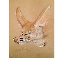 Fennec Fox Stretch Photographic Print