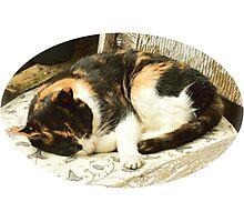 Sleeping Cat. Photographic Print
