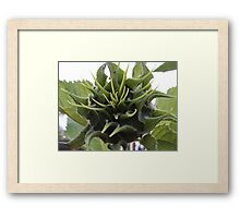 A beauty in the making Framed Print